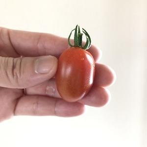 ミニトマトーーー!