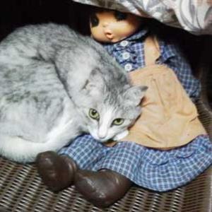 猫が行方不明になったら