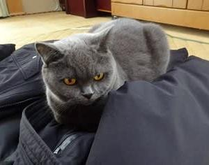 猫飼いのサガ。