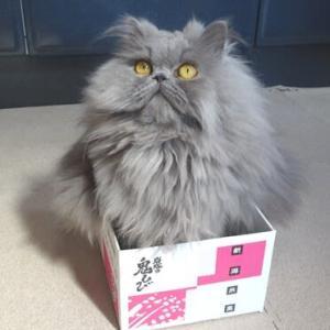 賞味期限が切れちゃった豆ひびちゃん【 動画付き 】