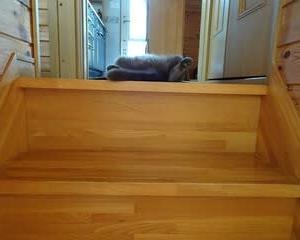 階段の上の特等席で転がってる猫&オリンピック選手へ声援を送ろう!