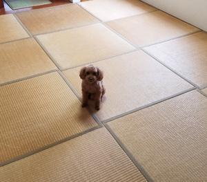 和室をフローリングへ、DIYなら10万円越えの作業が1万円台!