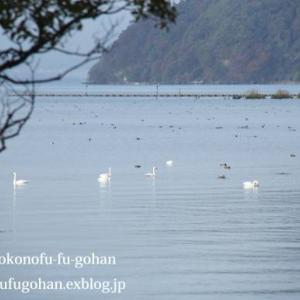 琵琶湖産鱒のムニエル弁当&琵琶湖は、すっかり冬支度&朝食色々