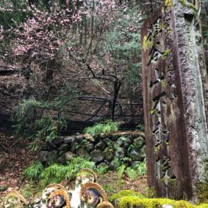 京都、狸山不動院、護王神社