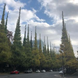外苑前いちょう並木