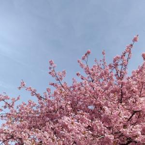 「河津桜」「融通のきかないやつら」