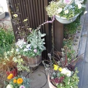 改造中の庭&ビオラの植え変え