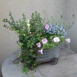 ブリキの鉢にピンクのペチュニアの寄せ植え