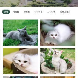 猫!ねこ!ネコ!