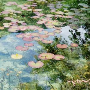口コミで広がった名もなき池