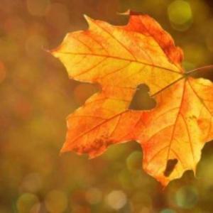 秋のそよぎ