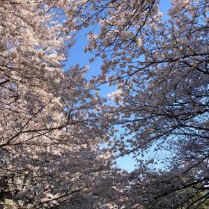 🌸麗らかな春の一日🌸