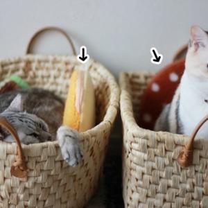 猫たちの冬用グッズ「レンジでチンしてぽっかぽか」。