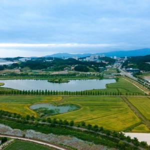 鏡浦(キョンポ)オニバス湿地は花を楽しむ人々の憩いの場