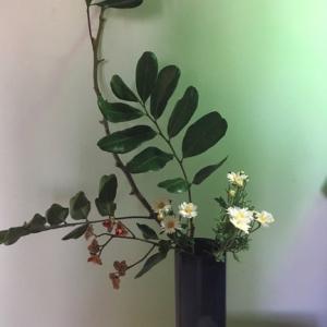 隣りと裏の家からはみ出た枝で生け花