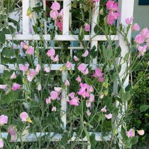 トレイスの周辺のお花