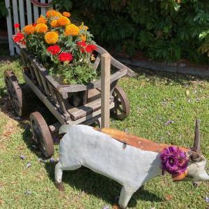 Mary Lou Heard Memorial Garden Tour ー その6