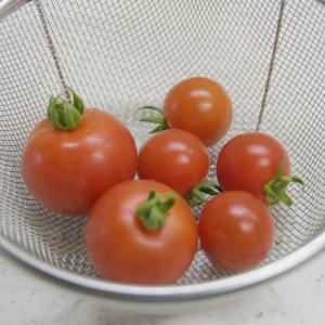 家庭菜園&プルメリア