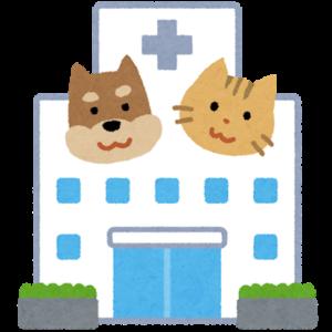 青猫、病院へいく。