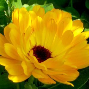 自由に小物作り!! 種からの花が綺麗に