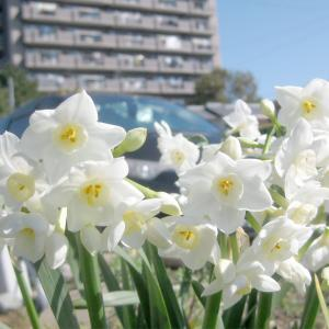 白い花がさわやか&眩しく  時間をかけたもの