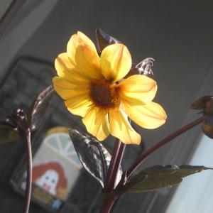 頑張って咲いてくれてる花