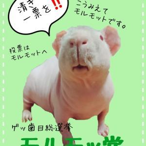 ゲッ歯目総選挙ラストスパート!