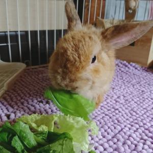野菜たべたよー。