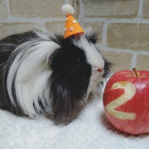 アルカス祝2歳!