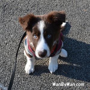 犬にきちんと伝えるためには根気が欠かせません。