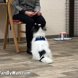 ドッグトレーニング:犬はちゃんと考えています。