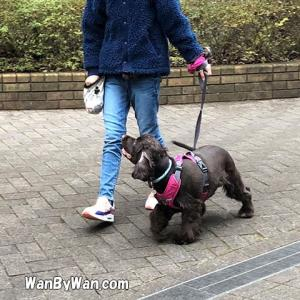 愛犬のトレーニングは家族みんなで。