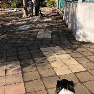 犬の特性をわかったうえでのトレーニング