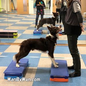 犬も体のバランスは大事