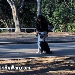 ドッグトレーニング:犬を退屈させない