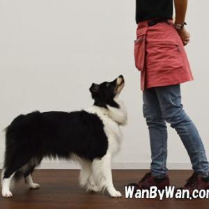 ドッグダンス:犬から見える景色