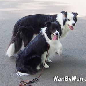 犬の性格:たがが外れる。