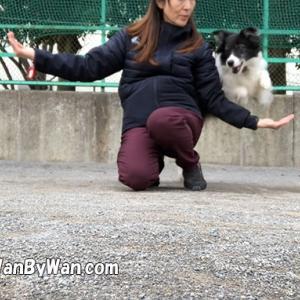 ドッグダンス:腕跳びを始める前に
