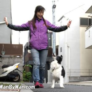 ドッグダンス:振り付けで犬を混乱させないようにするには。
