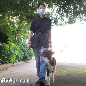 マスクは犬にもストレス