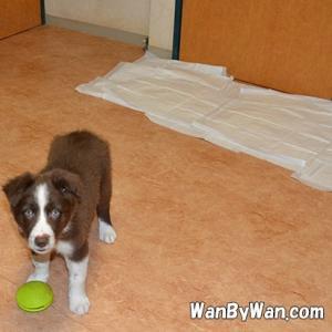 ドッグトレーニング:犬を叱ることとは