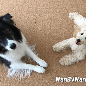 犬同士の挨拶は難しい