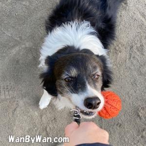 愛犬とひっぱりっこ遊び楽しんでますか?