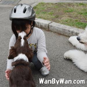 パピーレッスン:子犬の気持ちを尊重しましょう