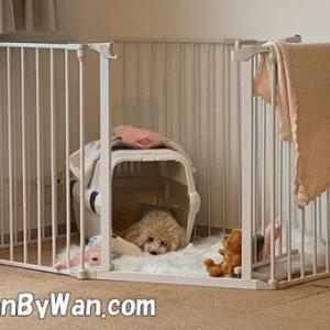 ドッグトレーニング:ハウスは安心できる場所