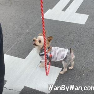 犬の行動改善は、その行動だけを変えようとしてもうまくいきません。