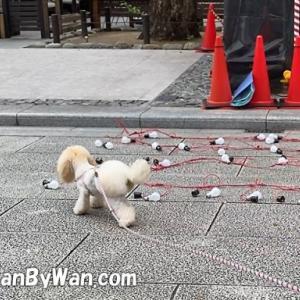 犬との生活:社会化の継続