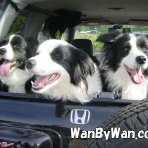 犬との生活:クルマに犬を乗せる