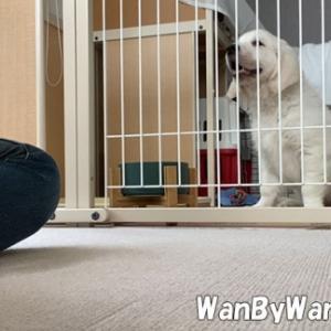 パピーレッスン:子犬の学習能力を侮らない。