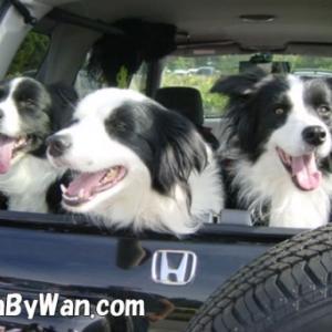 犬との生活:車酔いの話